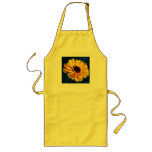 Golden Marigold and meaning Aprons