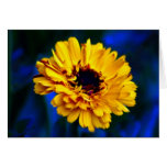 Golden Marigold and meaning Card