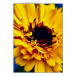 Golden Marigold and meaning Greeting Cards