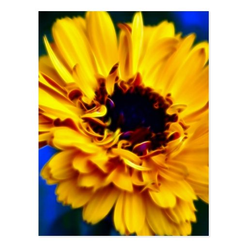 Golden Marigold and meaning Postcards