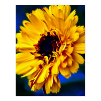 Golden Marigold flower and meaning Postcard