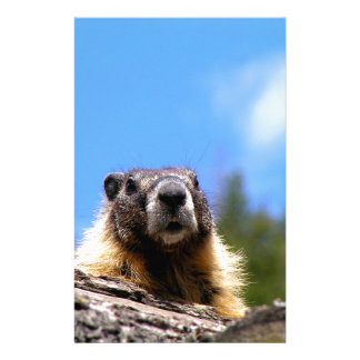 Golden Marmot in Canada Stationery