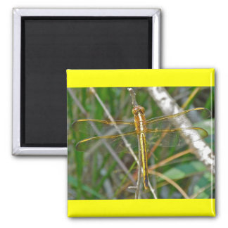 Golden Meadowhawk (Sympetrum) Dragonfly Items 2 Inch Square Magnet