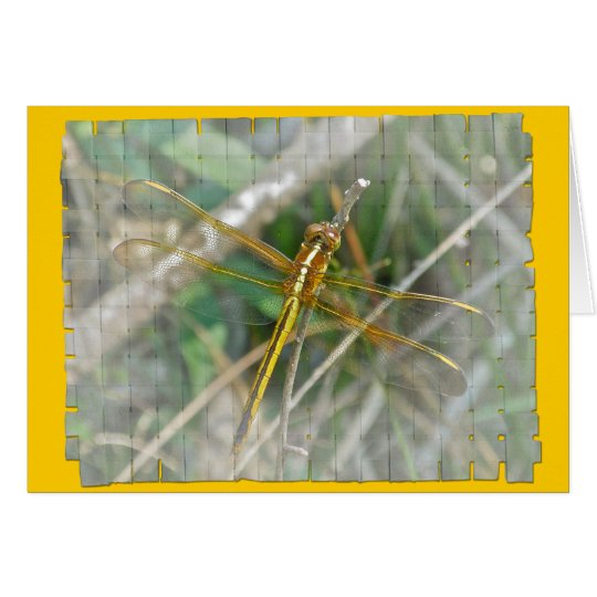 Golden Meadowhawk (Sympetrum) Dragonfly Items Card