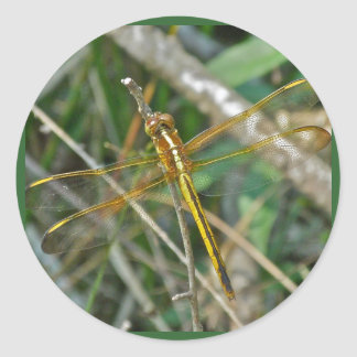 Golden Meadowhawk (Sympetrum) Dragonfly Items Classic Round Sticker