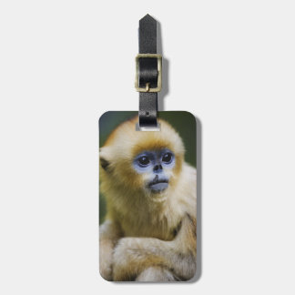 Golden monkey bag tag