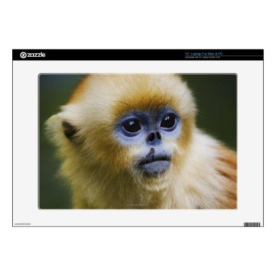 "Golden monkey decals for 15"" laptops"