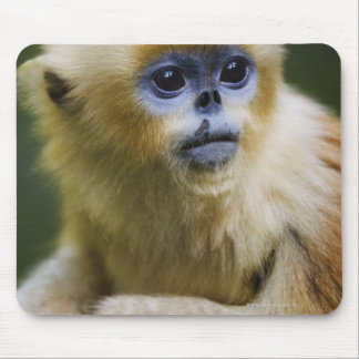 Golden monkey mouse pad