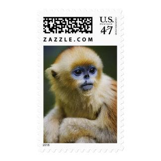 Golden monkey stamp