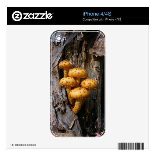 Golden Mushrooms ~ iPhone 4 Skin