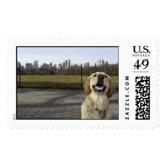 Golden on Great Lawn Postage