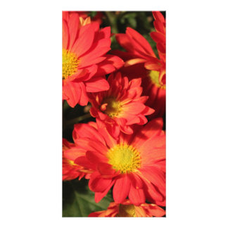 Golden,orange color daisy flowers. photo greeting card
