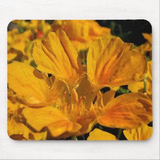 Golden Orange Nasturtium Mouse Pad