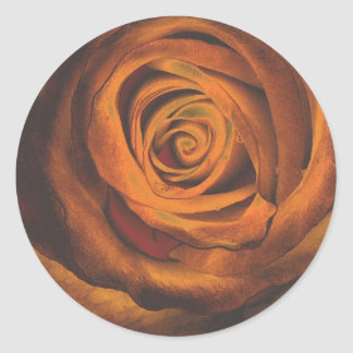 golden orange rose art classic round sticker