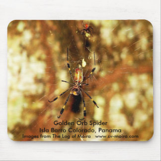 Golden Orb Spider Isla Barro Colorado, Panama Mouse Pad