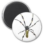 Golden Orb Spider Magnets