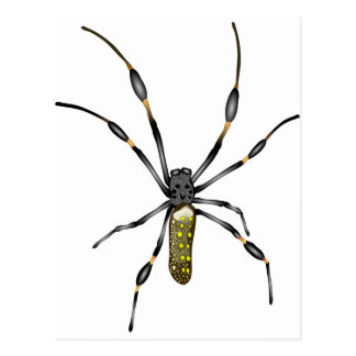 Golden Orb Spider Postcard