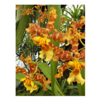Golden orchid postcard