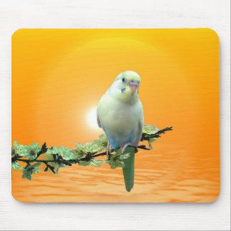 Golden Parakeet Mousepads