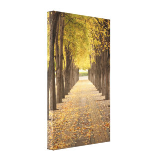 Golden Path Wrapped Canvas