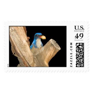 Golden Peanut Blue Jay Postage Stamp