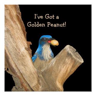 Golden Peanut Blue Jay Poster