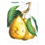 Golden pear Recipe Card Postcard