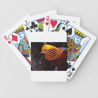 golden-pheasant-3346 bicycle playing cards