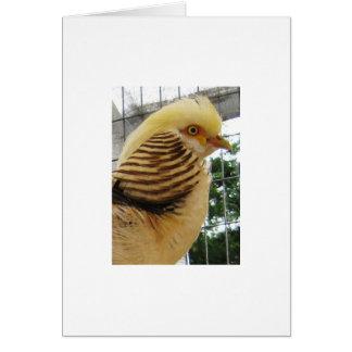 Golden Pheasant Face Card
