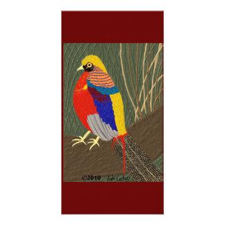 Golden Pheasant Photo Card