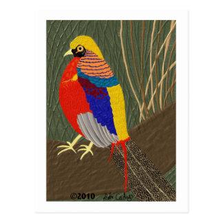 Golden Pheasant Postcard