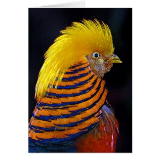 Golden pheasant print greeting card
