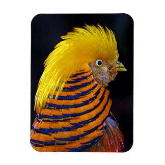 Golden pheasant print magnet