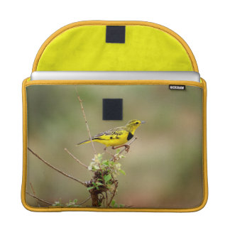 "Golden pipit, Kenya, 13"" Photo Sleeve For MacBook Pro"