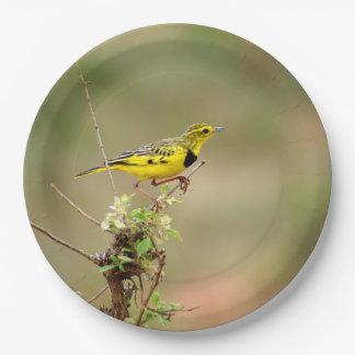 "Golden pipit, Kenya, 9"" Photo Paper Plate"