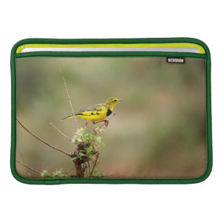 "Golden pipit, Kenya, Photo 11"" MacBook Sleeve"