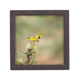 "Golden pipit, Kenya, Photo 2"" x 2"" Jewelry Box"