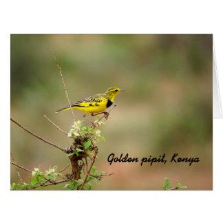 Golden pipit, Kenya, Photo Big Greeting Card