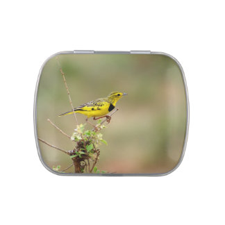 Golden pipit, Kenya, Photo Jelly Belly Candy Tins