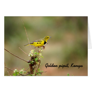 Golden pipit, Kenya, Photo Note Card