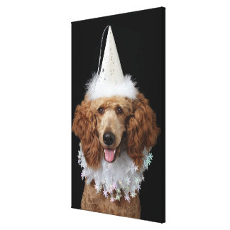 Golden Poodle Dog wearing a white clown costume Canvas Print