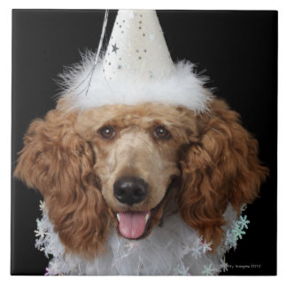 Golden Poodle Dog wearing a white clown costume Tile