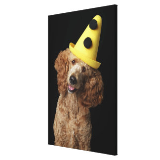 Golden Poodle Dog wearing a yellow clown hat Canvas Print