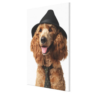 Golden Poodle Dog wearing Hat and Tie Canvas Print