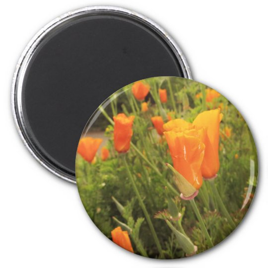 Golden Poppies Magnet