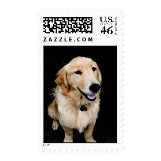Golden Stamps