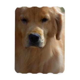 Golden Pup Magnet