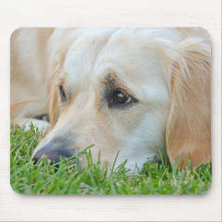 Golden Pup Mouse Pad