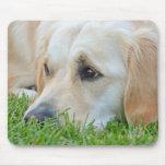 Golden Pup Mousepads