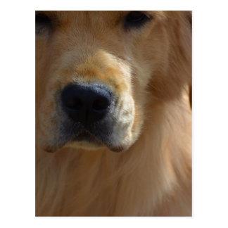 Golden Pup Postcard